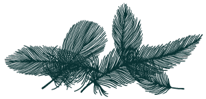 Twirp-feather-borders-dark-teal